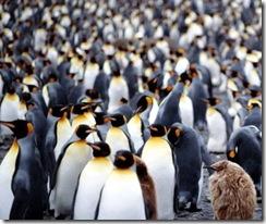 Pingüinia