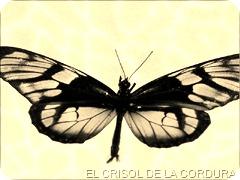 Espantapajaros-Girondo-Crisol de la Cordura 7