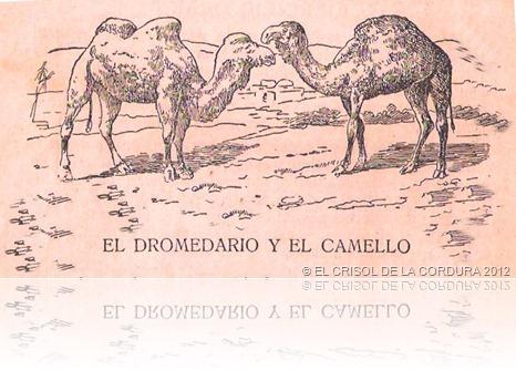 EL DROMEDARIO Y EL CAMELLO-EL CRISOL DE LA CORDURA
